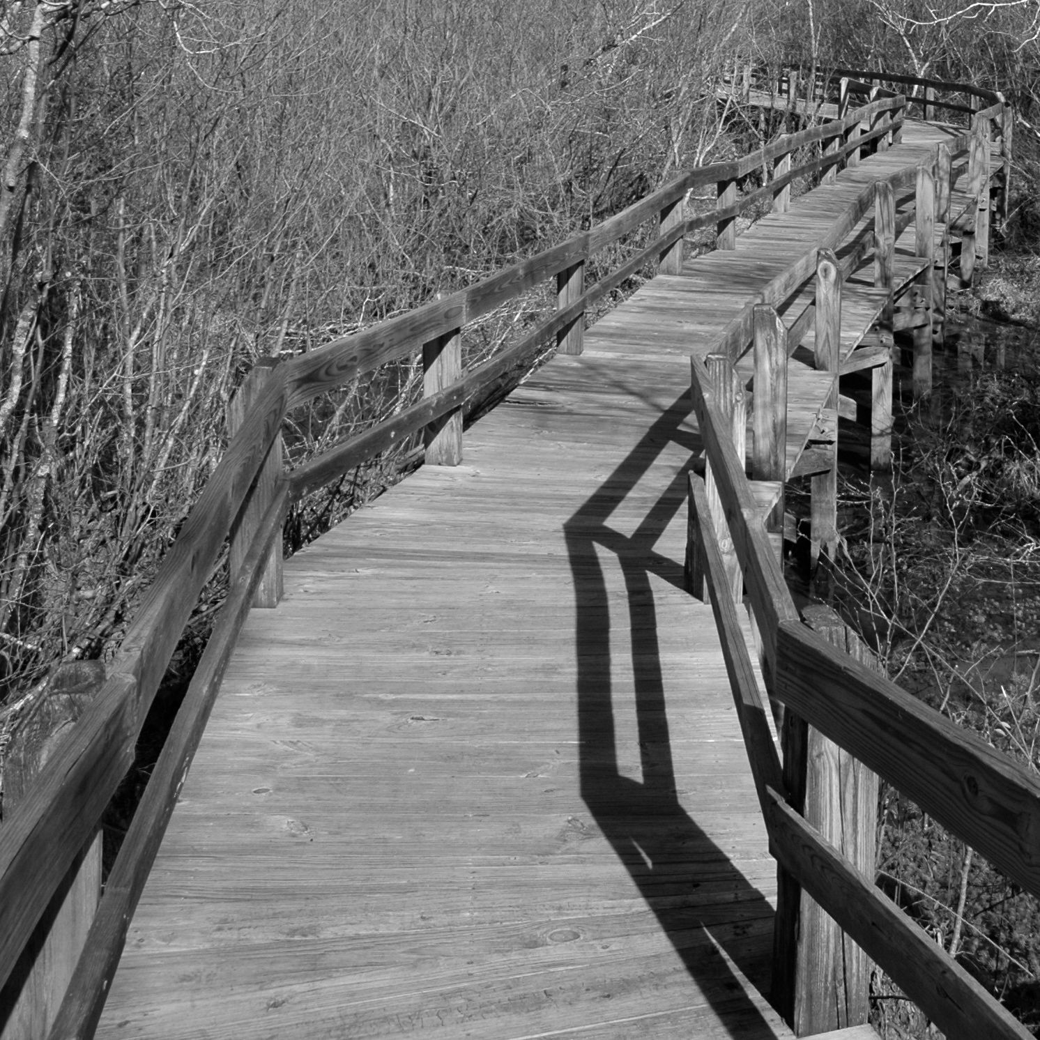 BoardwalkBottomBW